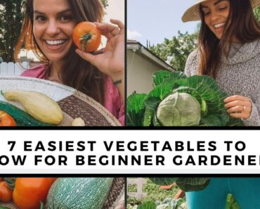 7 Easiest To Grow Vegetables For Beginners
