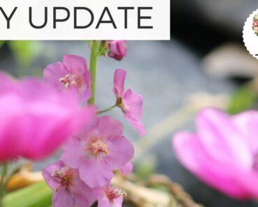 May Garden Update