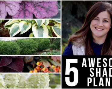 5 Awesome Plants for Shade! // Garden Answer