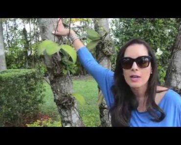 Orchids on Trees, Garden Tour March, Orchid Care for beginners,