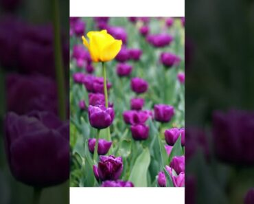 Flower Garden Ideas #YoutubeShorts #Shorts Landscape Design Cut Flower Garden