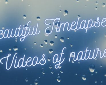 #Timelapse videos with soothing music of Nature, Flowers, buildings, sunrise,