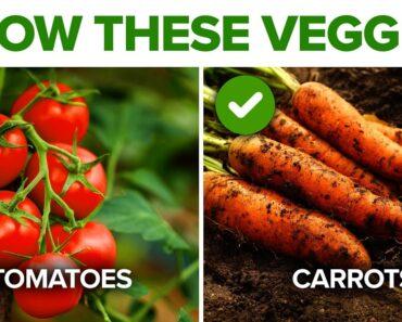 Top 11 Vegetables To Grow In Your Home Garden