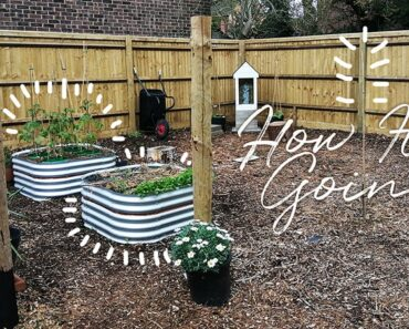 How The Garden is Going (and Future Plans)