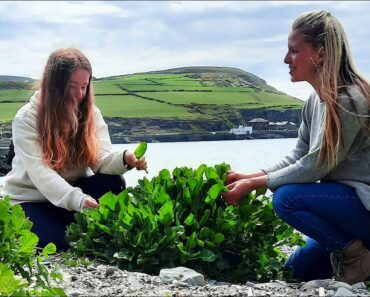 Edible Weeds and Wild Food Foraging for Beginners