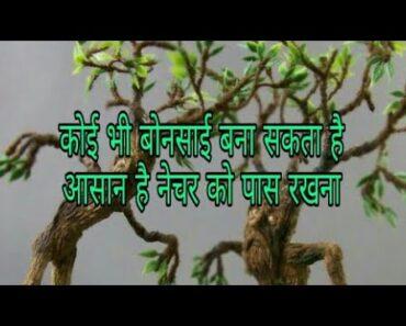 Bonsai tips for beginners/Hindi, Urdu/ Vijaya's creative garden