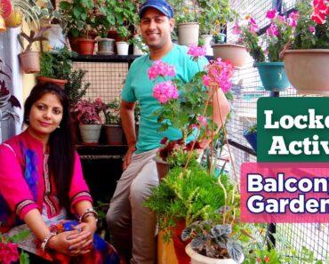 Balcony Garden Shimla India | Balcony Garden 2021