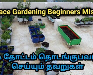 Beginners Mistakes in Terrace Gardening