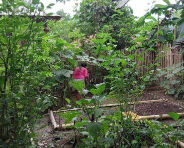 Mother, harvesting vegetables in our backyard garden