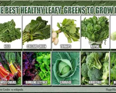 The Best Healthy Leafy Greens to Grow at Home