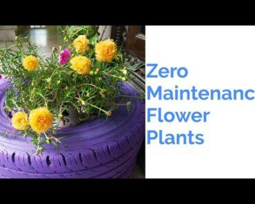 Zero Maintenance Flower plants/Plants for beginners
