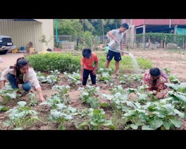 Collect fresh vegetable from my family vegetable garden