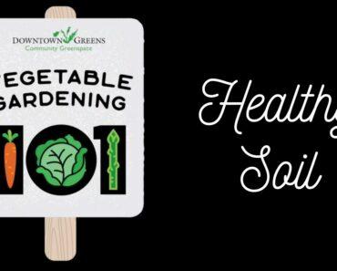 Healthy Soil: Vegetable Gardening 101