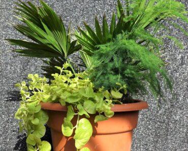 SECRETS To Planting A Tropical Flower Pot Garden For Beginners/Asparagus