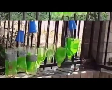 Home vegetable garden at home BE HEALTHY