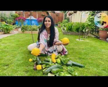 Harvesting vegetables in our garden (part2) 2021