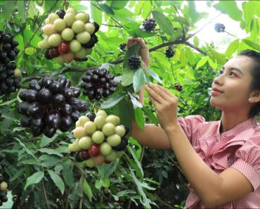 Have you ever been this fruit in your homeland –