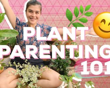 BEGINNER PLANT CARE TIPS! How to start PLANT PARENTING in