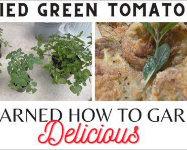 How to Start a Vegetable Garden + Beginner Tips |