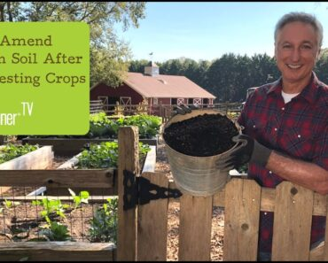 Amending Garden Soil After a Crop Harvest