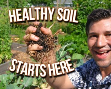How We Keep the Soil Healthy In Our Organic Vegetable