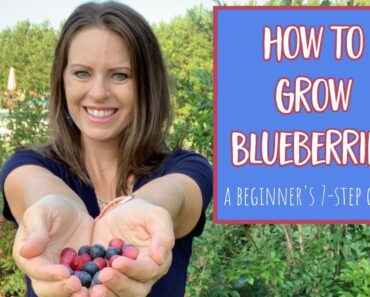 How to Grow Blueberries: 7 Step Guide for Beginners