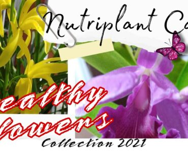 NUTRIPLANT CARE | HEALTHY FLOWERS COLLECTION 2021
