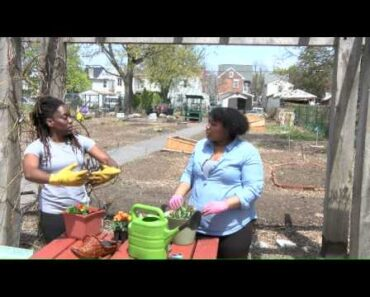 Container gardening is great for beginners