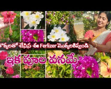 Best Ferlizer from kitchen waste || More Flowers || Excellent