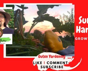 Healthy Grocery Haul from Urban Backyard Garden