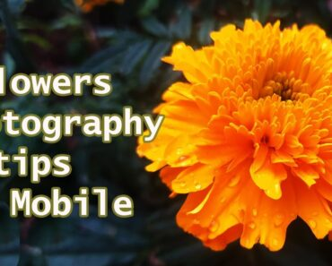 flowers photo tips on mobile