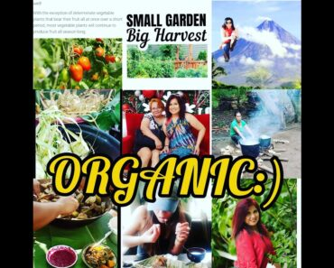 #Promote #healthier #food and how to grow #vegetables in our