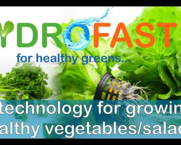 Hydroponic Technology for Healthy Vegetables