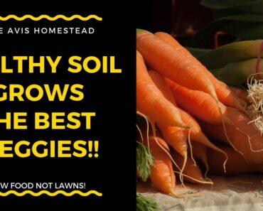Healthy Soil Grows Tasty, Nutrient Dense Veggies! Permaculture soil formation