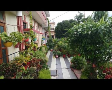 17+ evergreen, low maintanance permanent plants/सदाबहार परमानेन्ट पौधे/ Plants for