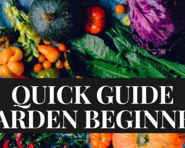 Gardening For Beginners Guide [14 tips to be successful]