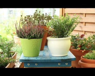 Vegetable Container Gardening For Beginners and Garden Tour!