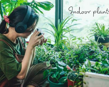 #29) 10 Easy Indoor Plants Care Tips to Keep Your