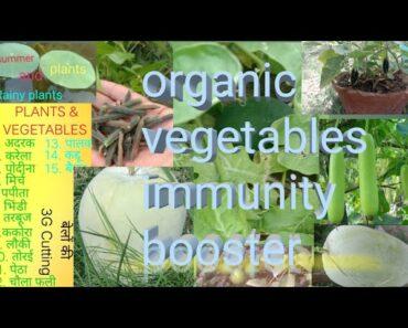 गर्मियों की सब्जियां